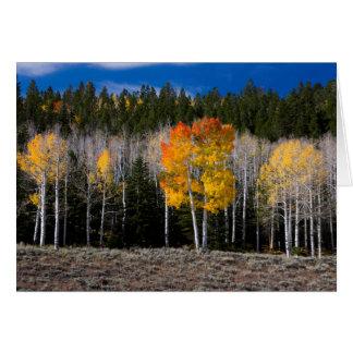 Utah, USA. Aspen Trees (Populus Tremuloides) 2 Card