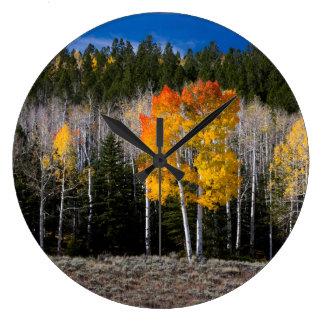 Utah, USA. Aspen Trees (Populus Tremuloides) 2 Clock