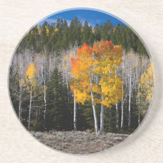 Utah, USA. Aspen Trees (Populus Tremuloides) 2 Coaster