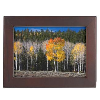 Utah, USA. Aspen Trees (Populus Tremuloides) 2 Keepsake Box