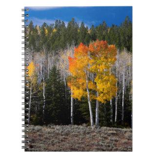 Utah, USA. Aspen Trees (Populus Tremuloides) 2 Notebooks