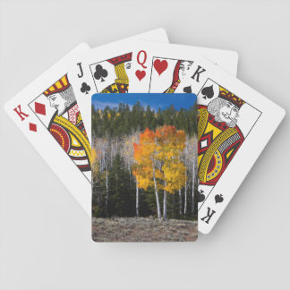 Utah, USA. Aspen Trees (Populus Tremuloides) 2 Playing Cards