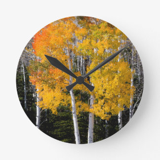 Utah, USA. Aspen Trees (Populus Tremuloides) 3 Clocks