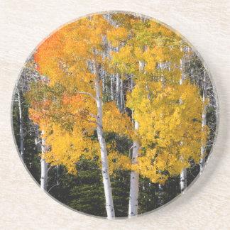 Utah, USA. Aspen Trees (Populus Tremuloides) 3 Coaster