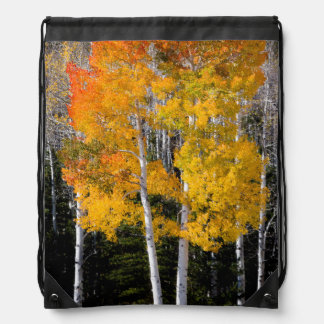 Utah, USA. Aspen Trees (Populus Tremuloides) 3 Drawstring Bag