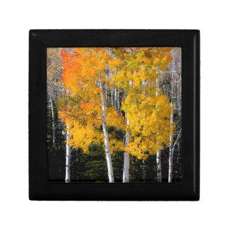 Utah, USA. Aspen Trees (Populus Tremuloides) 3 Gift Box
