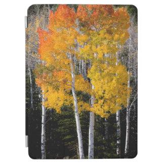 Utah, USA. Aspen Trees (Populus Tremuloides) 3 iPad Air Cover