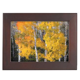 Utah, USA. Aspen Trees (Populus Tremuloides) 3 Keepsake Box