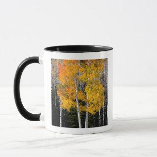 Utah, USA. Aspen Trees (Populus Tremuloides) 3 Mug
