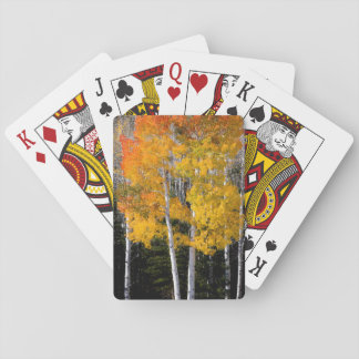 Utah, USA. Aspen Trees (Populus Tremuloides) 3 Playing Cards