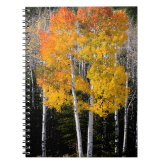Utah, USA. Aspen Trees (Populus Tremuloides) 3 Spiral Notebook