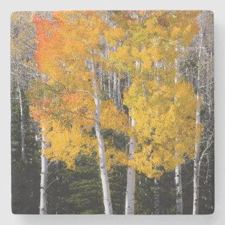 Utah, USA. Aspen Trees (Populus Tremuloides) 3 Stone Coaster