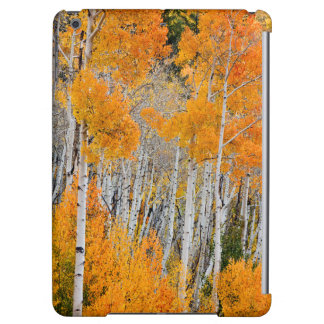 Utah, USA. Aspen Trees (Populus Tremuloides) 4