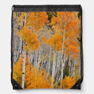 Utah, USA. Aspen Trees (Populus Tremuloides) 4 Rucksacks