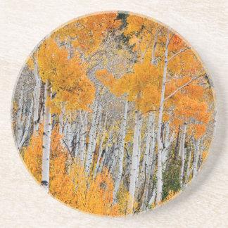 Utah, USA. Aspen Trees (Populus Tremuloides) 4 Coaster