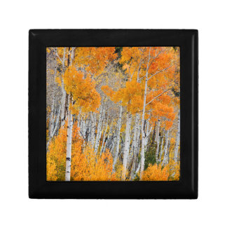 Utah, USA. Aspen Trees (Populus Tremuloides) 4 Gift Box