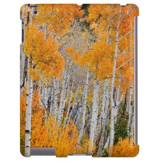 Utah, USA. Aspen Trees (Populus Tremuloides) 4 iPad Case