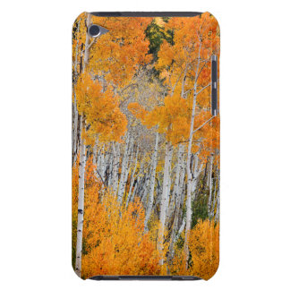Utah, USA. Aspen Trees (Populus Tremuloides) 4 iPod Touch Covers