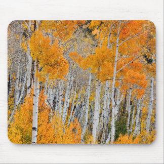 Utah, USA. Aspen Trees (Populus Tremuloides) 4 Mouse Mat