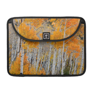 Utah, USA. Aspen Trees (Populus Tremuloides) 4 Sleeve For MacBook Pro