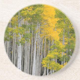 Utah. USA. Aspen Trees (Populus Tremuloides) Coaster