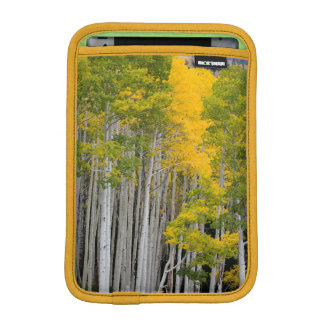Utah. USA. Aspen Trees (Populus Tremuloides) iPad Mini Sleeve