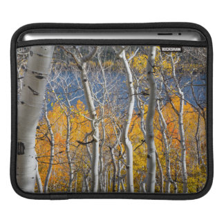 Utah, USA. Aspen Trees (Populus Tremuloides) iPad Sleeve