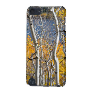 Utah, USA. Aspen Trees (Populus Tremuloides) iPod Touch 5G Case