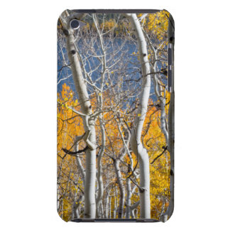 Utah, USA. Aspen Trees (Populus Tremuloides) iPod Touch Cases