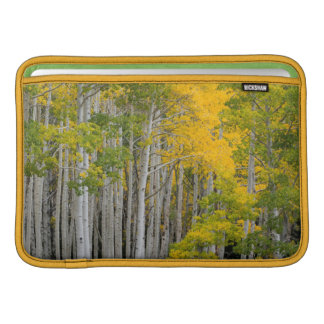 Utah. USA. Aspen Trees (Populus Tremuloides) MacBook Sleeve