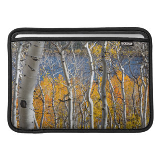 Utah, USA. Aspen Trees (Populus Tremuloides) MacBook Sleeve