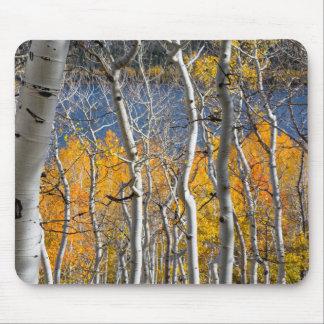 Utah, USA. Aspen Trees (Populus Tremuloides) Mouse Mat
