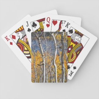 Utah, USA. Aspen Trees (Populus Tremuloides) Playing Cards