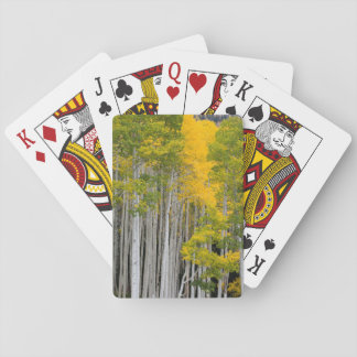 Utah. USA. Aspen Trees (Populus Tremuloides) Playing Cards