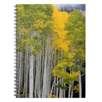 Utah. USA. Aspen Trees (Populus Tremuloides) Spiral Notebook