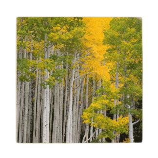 Utah. USA. Aspen Trees (Populus Tremuloides) Wood Coaster