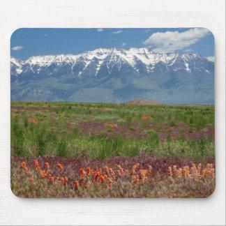 Utah, USA. Mt. Timpanogos Rises Above Mouse Mat