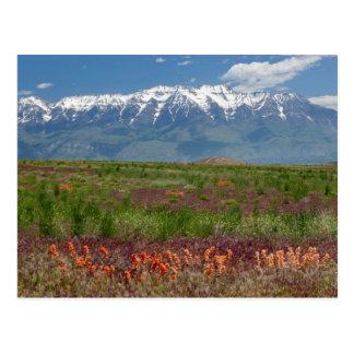 Utah, USA. Mt. Timpanogos Rises Above Postcard