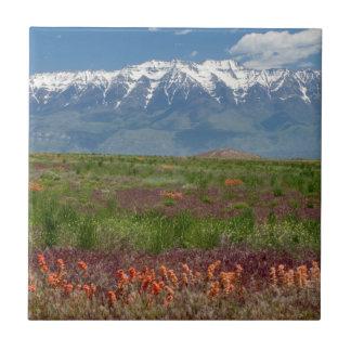 Utah, USA. Mt. Timpanogos Rises Above Small Square Tile