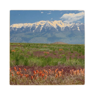 Utah, USA. Mt. Timpanogos Rises Above Wood Coaster