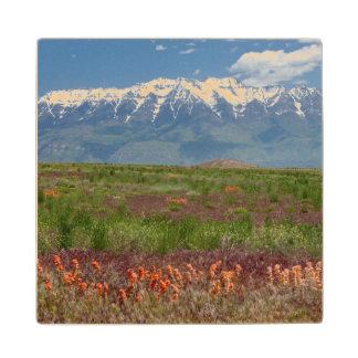 Utah, USA. Mt. Timpanogos Rises Above Maple Wood Coaster