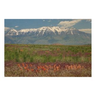 Utah, USA. Mt. Timpanogos Rises Above Wood Print