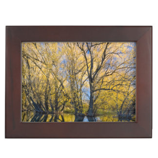 Utah. USA. Peachleaf Willow Trees Memory Boxes