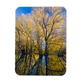 Utah. USA. Peachleaf Willow Trees Rectangular Photo Magnet