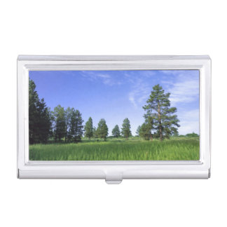 UTAH. USA. Ponderosa pines Pinus ponderosa) & Business Card Holder