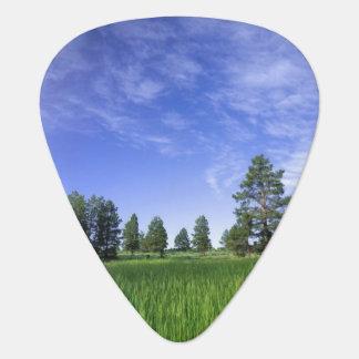 UTAH. USA. Ponderosa pines Pinus ponderosa) & Plectrum