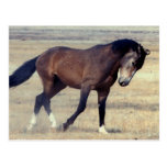 Utah Wild Mustang Postcard