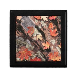 Utah, Zion National Park, Patterns of autumn Gift Box