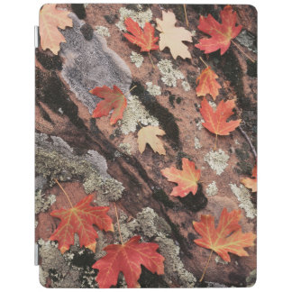 Utah, Zion National Park, Patterns of autumn iPad Cover