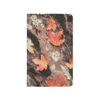Utah, Zion National Park, Patterns of autumn Journal